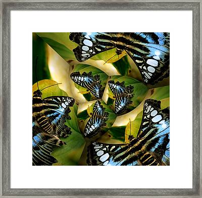 Blue Butterfly Collage Framed Print by Irma BACKELANT GALLERIES