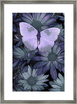 Blue Butterfly Framed Print by JQ Licensing