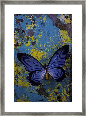 Blue Butterfly On Rusty Wall Framed Print