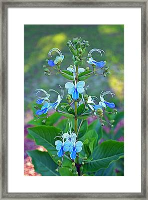 Blue Butterfly Plant Framed Print by Aimee L Maher Photography and Art Visit ALMGallerydotcom