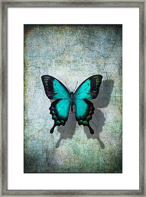 Blue Butterfly Resting Framed Print by Garry Gay