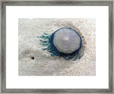 Blue Button #2 Framed Print