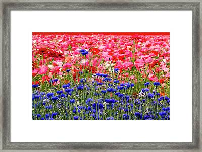 Blue Button Standout Framed Print by Jean Noren