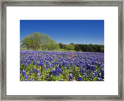 Blue By You Framed Print