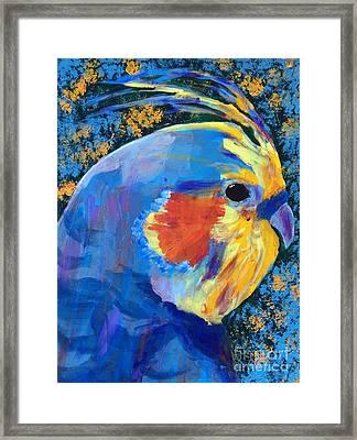 Blue Cockatiel Framed Print