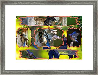 Framed Print featuring the photograph Blue Collage 2 by Angel Cher