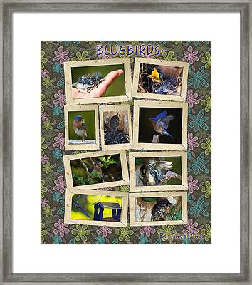 Framed Print featuring the photograph Blue Collage by Angel Cher