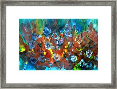 Blue Columbine Framed Print by Don  Wright