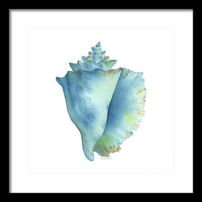 Conch Framed Prints