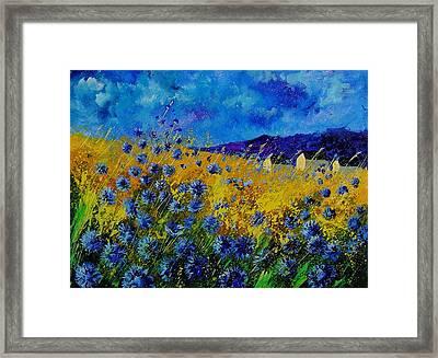 Blue Cornflowers Framed Print by Pol Ledent