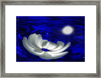 Blue Cosmos Framed Print by Terence Davis