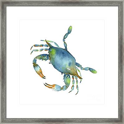 Blue Crab Framed Print by Amy Kirkpatrick