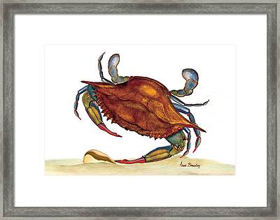 Framed Print featuring the painting Blue Crab by Anne Beverley-Stamps