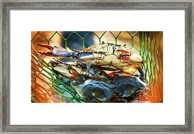 Blue Crab Cha Cha Cha Framed Print by Karen Wiles