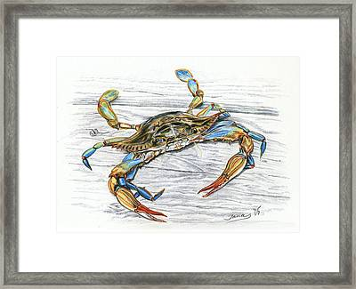 Blue Crab Framed Print by Jana Goode