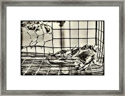 Blue Crabs - Vintage Framed Print