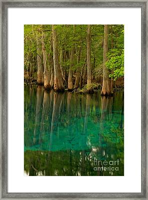 Blue Cypress Reflections Framed Print by Adam Jewell