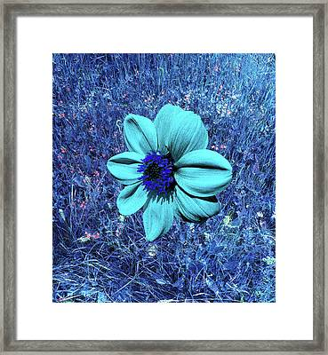 Blue Dahlia Abstract Framed Print by Martine Murphy