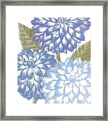 Blue Dahlias Framed Print by Mindy Sommers