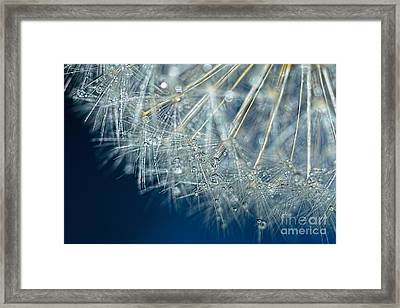 Blue Dandelion Dew By Kaye Menner Framed Print