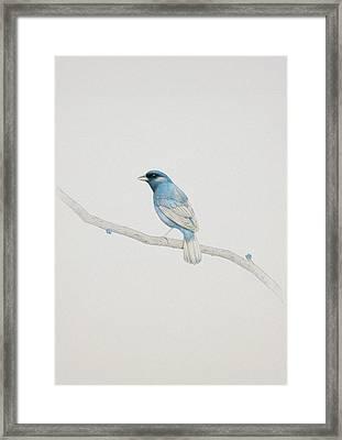 Blue Framed Print by Diego Fernandez