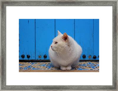 Framed Print featuring the photograph Blue Door White Cat by Ramona Johnston