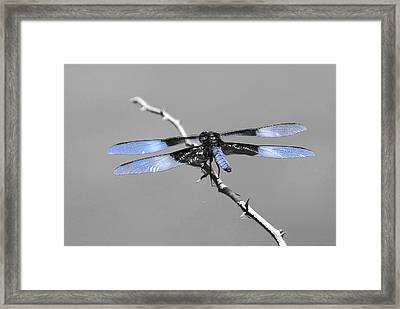 Blue Dragon Framed Print by Cindy Manero