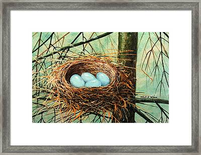 Blue Eggs In Nest Framed Print