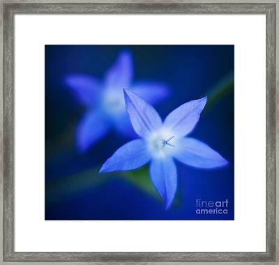 Blue Etoile Framed Print by Mike Reid