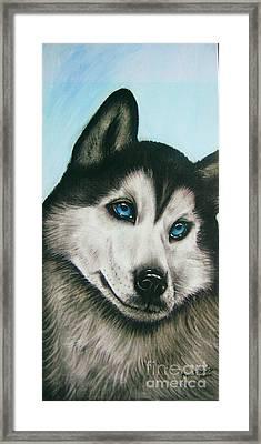 blue eye Husky  Framed Print by Anastasis  Anastasi
