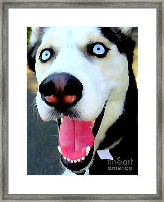 Blue Eyed Buddy Framed Print