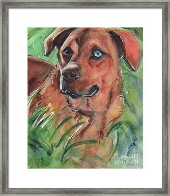 Blue Eyed Dog Framed Print