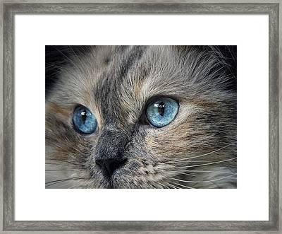 Blue Eyed Girl Framed Print by Karen Stahlros