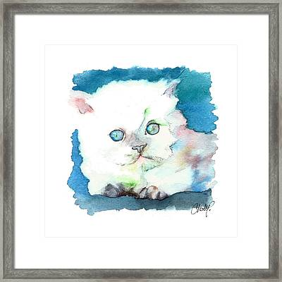 Blue Eyed Kitten Framed Print