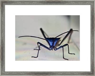Blue-eyed Monster Framed Print by Douglas Barnett