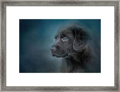 Blue Eyed Puppy Framed Print