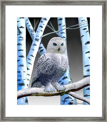 Blue-eyed Snow Owl Framed Print by Glenn Holbrook