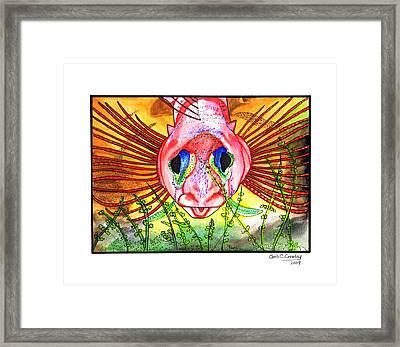 Blue-eyed Triple Fin Framed Print by Chris Crowley
