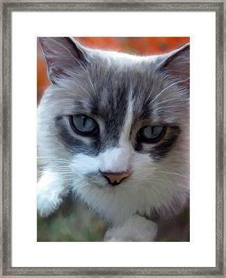 Blue Eyes Framed Print