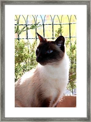 Blue Eyes Framed Print by Sonja Bonitto
