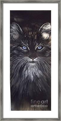 Blue Eyes The Cat Framed Print