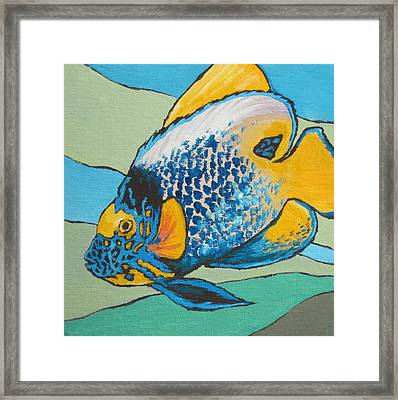 Blue Face Angelfish Framed Print by Sandy Tracey