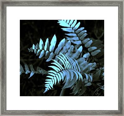 Blue Fern Framed Print by Susanne Van Hulst