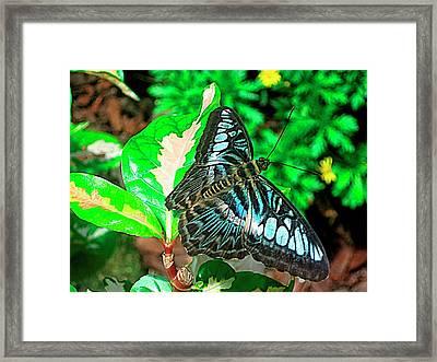 Blue Flight Photography Framed Print by Mario Perez