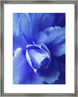 Blue Floral Begonia Framed Print by Jennie Marie Schell