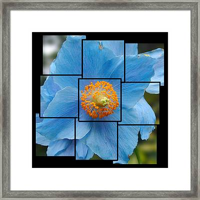 Blue Flower Photo Sculpture  Butchart Gardens  Victoria Bc Canada Framed Print
