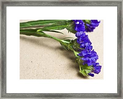 Blue Flower Framed Print by Svetlana Sewell