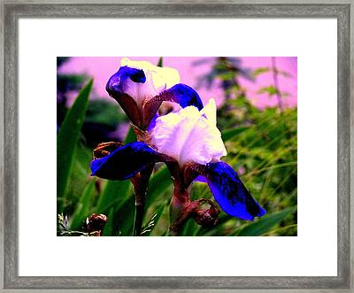 Blue Flowers Framed Print by Aron Chervin