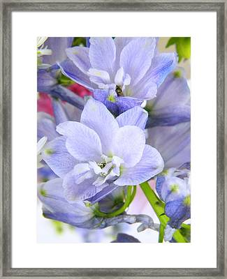 Blue Flowers Framed Print by Alyona Firth