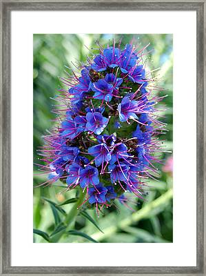 Blue Flowers Framed Print by Amy Fose